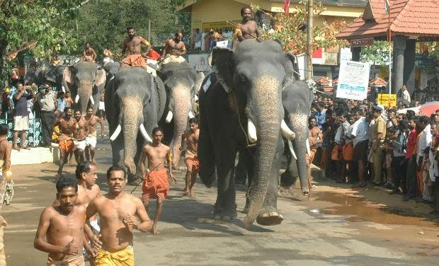 Guruvayur Temple Elephant Race