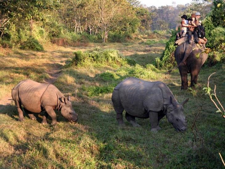 Jungle Safari in Cotigao Wildlife Sanctuary
