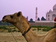 6 Nights 7 Days Golden Triangle Tour With Pushkar